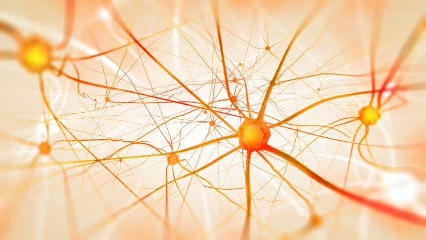 Orange brain neurons